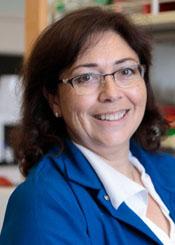Luisa Iruela-Arispe, PhD